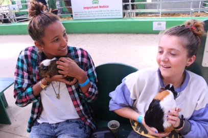 Willows farm with Mollie and some Guinea Pigs